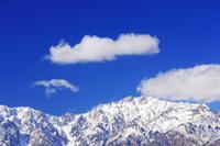 長野県 白馬村 白沢峠 新雪の唐松岳とわた雲