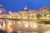 山形県 鶴岡公園の桜と致道博物館