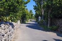 沖縄県 フクギ並木 波照間島