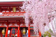 浅草寺 宝蔵門と満開の枝垂れ桜