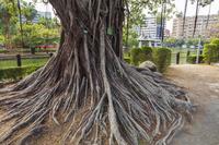 台湾 台中公園