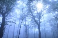 朝霧につつまれる森