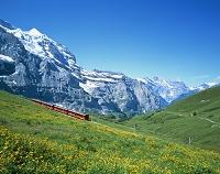 スイス 登山電車と花 クライネシャイデック