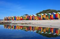 南アフリカ ケープ半島
