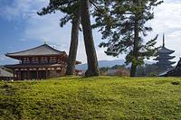 奈良県 興福寺 秋景
