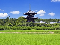 奈良県 田園と法起寺