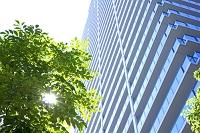 高層マンションと街路樹