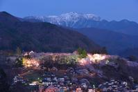 長野県 伊那市 ライトアップされた高遠城址公園の桜と仙丈ヶ岳