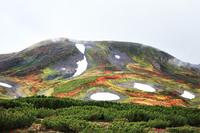 北海道 雪渓残る大雪山とハイマツ