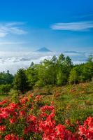 山梨県 ツツジ咲く甘利山より富士山遠望