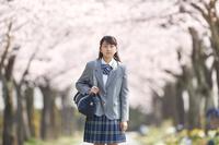 桜並木と女子中学生