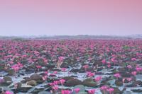 タイ ノンハン湖 タレーブアデーン