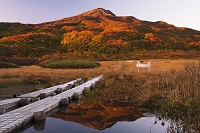 秋田県 紅葉の竜ヶ原湿原より鳥海山(出羽富士)朝景
