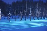 北海道 青い池のライトアップ