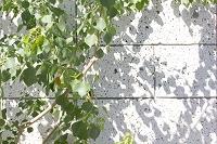 住宅の壁の植物の影