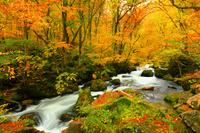 青森県 奥入瀬渓流・阿修羅の流れと紅葉