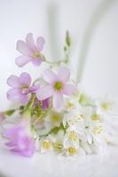 小さい花のアリュームとオキザリスのブーケ