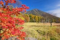 栃木県 紅葉の戦場ヶ原より男体山(日光富士)