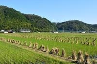 篠山 収穫後の稲