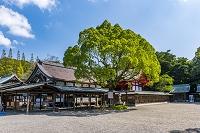 福岡県 宗像大社の拝殿
