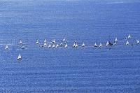 神奈川県 湘南海岸のヨット
