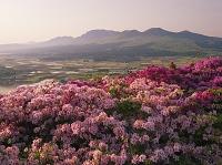 熊本県 ツツジ咲く長寿ヶ丘公園より阿蘇山 朝景