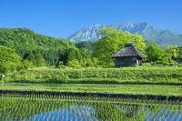 鳥取県 新緑の大山とカヤブキ小屋