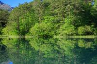福島県 新緑の毘沙門沼