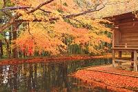 岩手県 中尊寺・弁財天堂と池に映る紅葉
