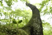 木の幹から生える双葉