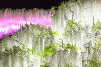 栃木県 足利フラワーパーク