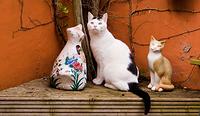ネコの置物に挟まれた猫
