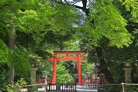 京都府 新緑の下鴨神社