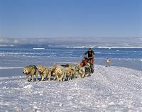南極 犬ぞり