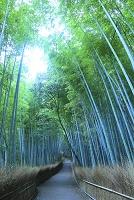 京都府 嵯峨野 早朝の竹林の小径
