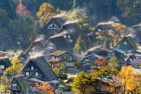 岐阜県 白川郷 朝の日差しで湯気が立ち上る茅葺き屋根