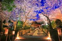 滋賀県 桜の咲く三井寺のライトアップ