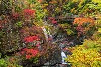 奈良県 みたらい渓谷
