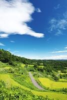 新潟県 星峠の棚田と農道