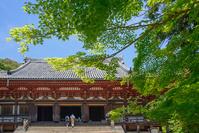 神護寺 新緑の金堂
