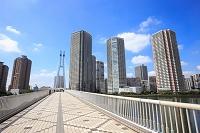 東京都 辰巳桜橋と東雲の街並み