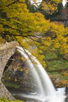 熊本県 黄葉に囲まれ放水する通潤橋