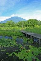 長野県 朝の水生植物園 スイレンと黒姫山