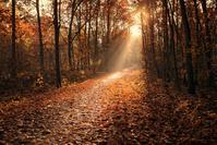 森と日差し
