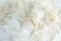 アルパカの体毛