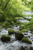 木谷沢渓流 流れ 江府町 鳥取県