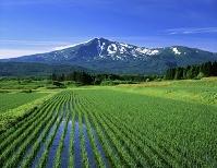 秋田県 水田と鳥海山