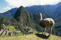 ペルー インカ リャマとマチュ・ピチュ