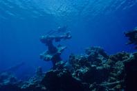ミクロネシア トラック諸島 海底に沈んだ第二日野丸の大砲
