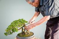 盆栽をつくる男性